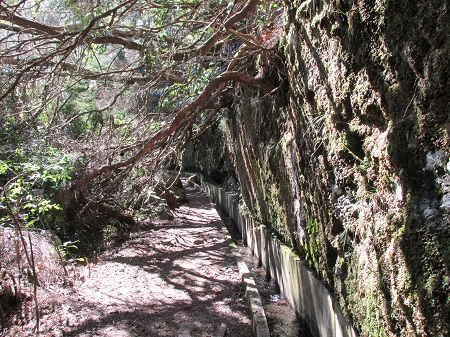 Levada on Madeira Island