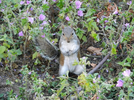 Parks of London are full of squirrels.