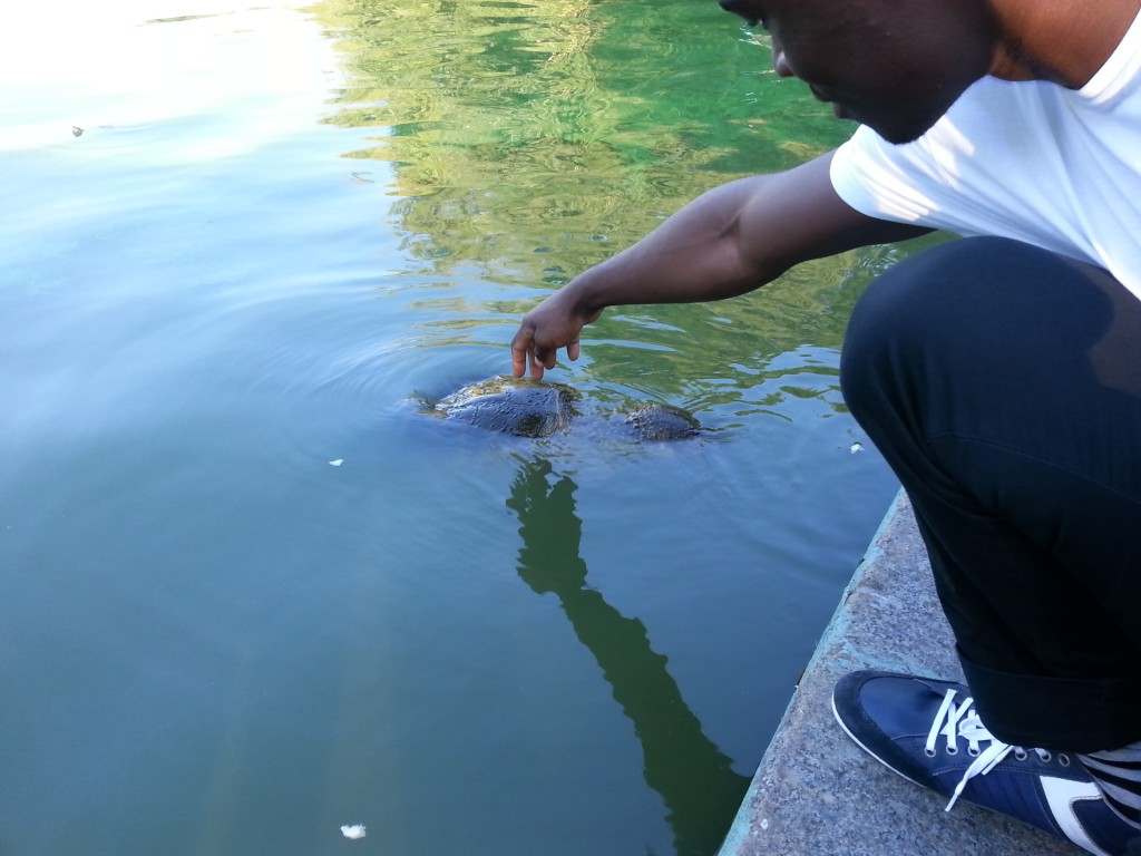 turtle, Michel, new york, central park