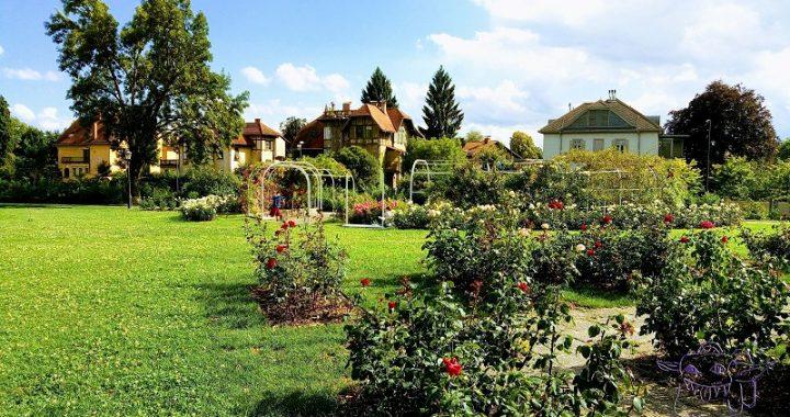 rose, Tivoli, Ljubljana, Slovenia