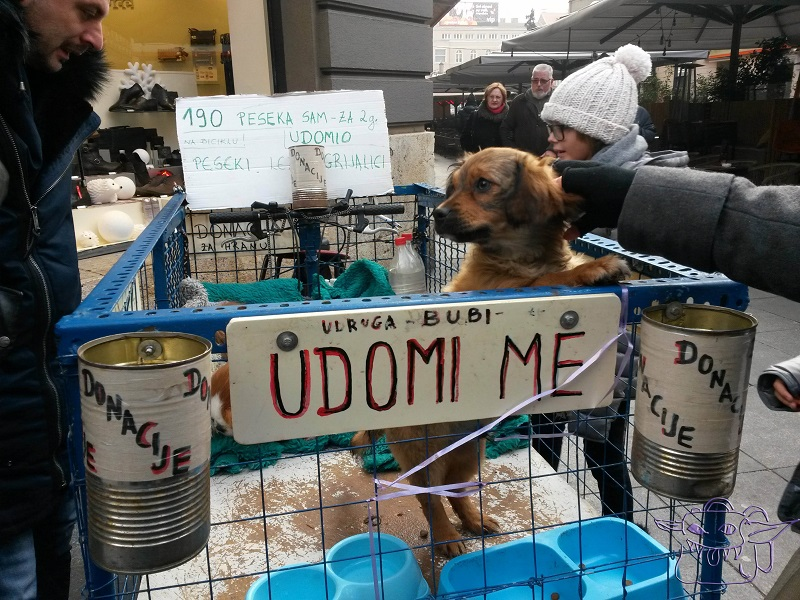 christmas, homeless, doggie, Zagreb, Advent