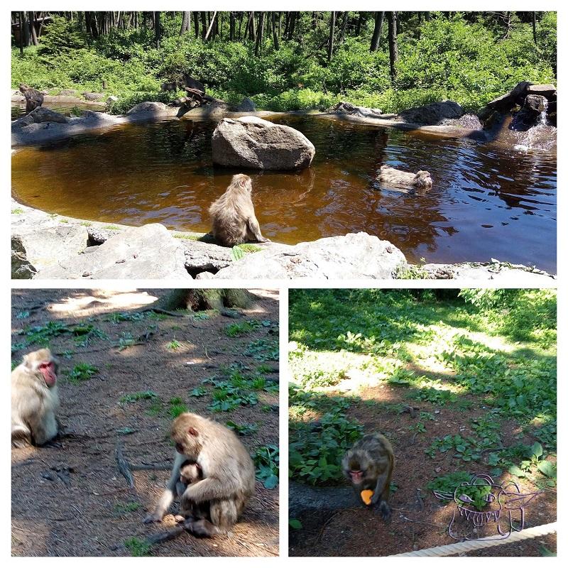 monkeys, affenberg, Villach, Austria, Carinthia