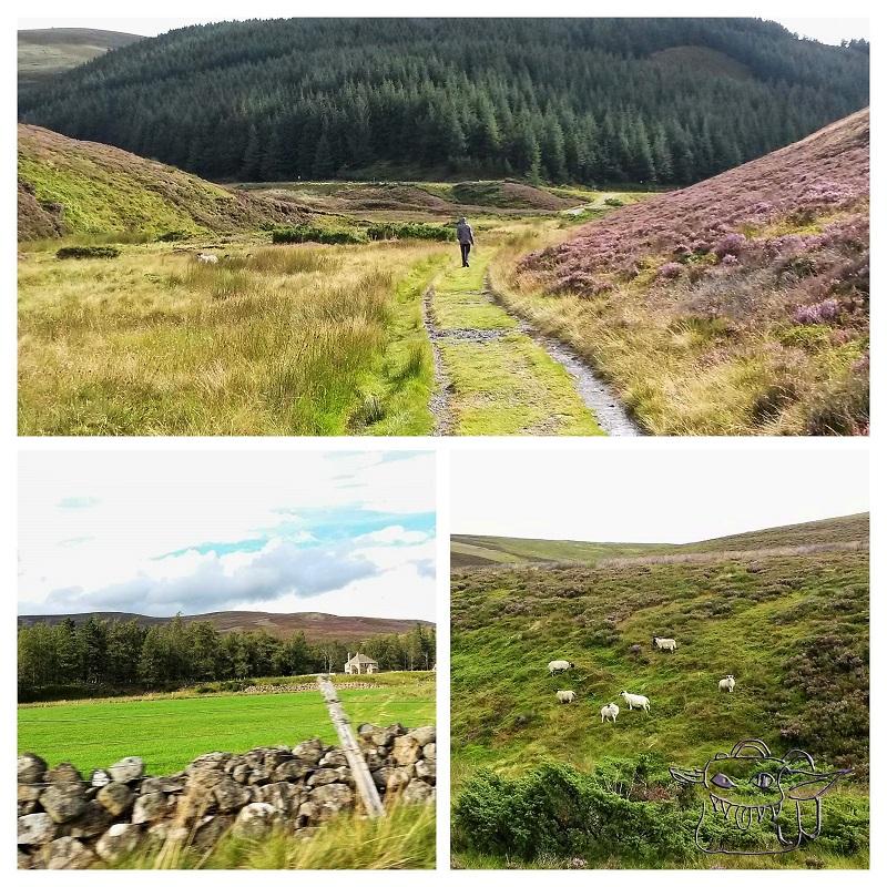 scotland, sheep, hiking, Highlands, train travel