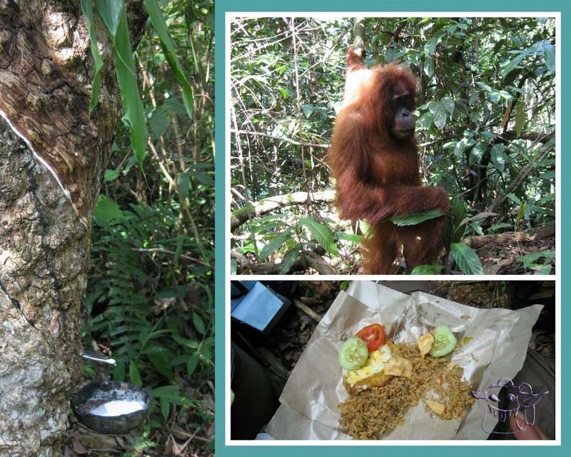 monkeys, Bukit Lawang, Sumatra